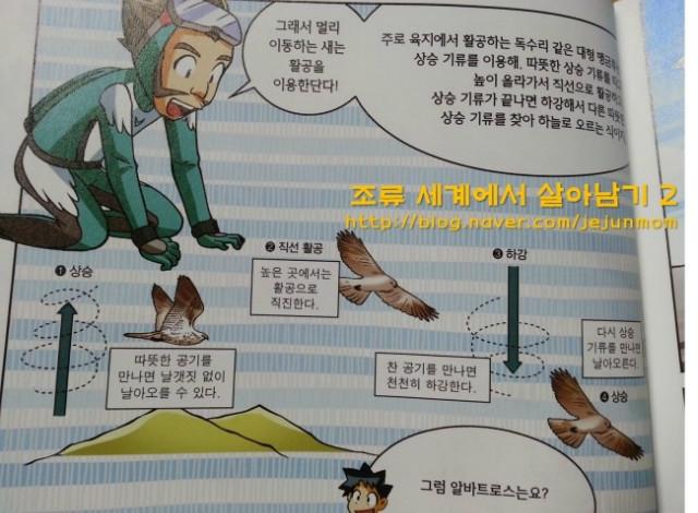 survival_in_birds_world_jejunmom001.jpg