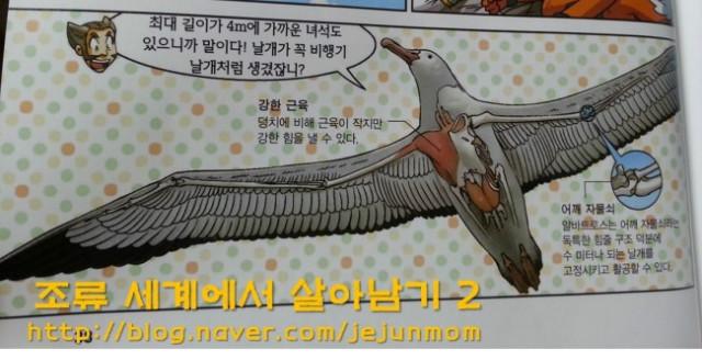 survival_in_birds_world_jejunmom002.jpg