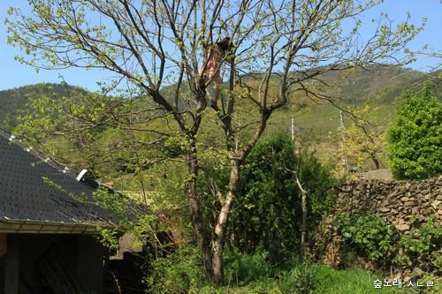 시골아이-17-0416-01+_tn.jpg